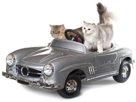 Viaggiare in auto col gatto