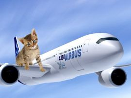Gatto in viaggio in aereo
