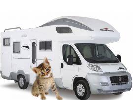 In campeggio col proprio gatto