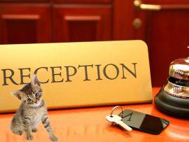Cosa sapere prima di portare il proprio gatto in hotel