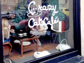 Gatti in vetrina, al Crazy Catcafé a Milano