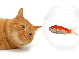 Gatto con pesce rosso
