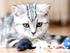 Giochini per gatti