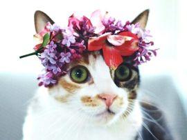 Come curare il gatto in modo naturale