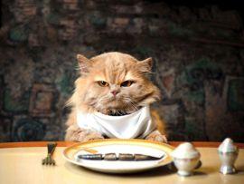 Perché il gatto è schizzinoso