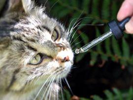Cure naturali per la digestione del gatto