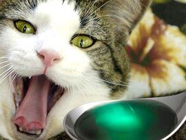Rimedi naturali contro l'avvelenamento del gatto