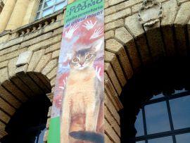 """Mostra a Verona: """"Il Gatto e l'Uomo"""""""