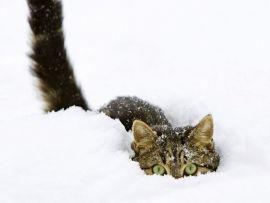 Gatti in inverno