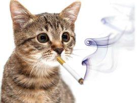 I gatti e il fumo di sigaretta