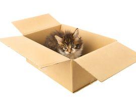 Fare un trasloco con il proprio gatto
