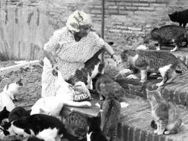 Colonie feline e gattare