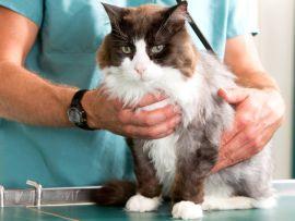 Malattie dei gatti