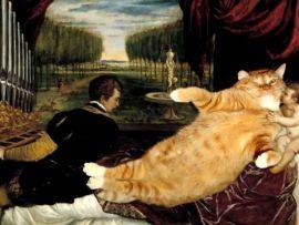 Gli italiani preferiscono i gatti ciccioni