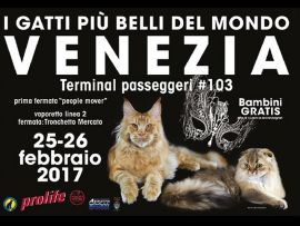Esposizione felina 2017. 25 e 26 Febbraio a Venezia