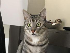 Padrone stressato e gatto stressato