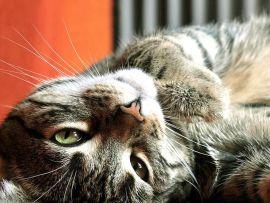 Schock e traumi gatti