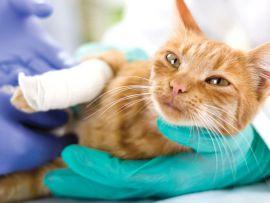Gatto con zampa rotta