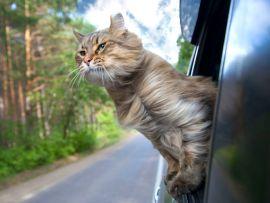 Gatto in viaggio anche fuori regione