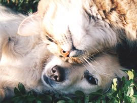 Collirio per cani e gatti