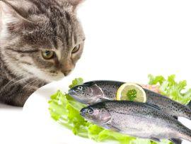 Il pesce nell'alimentazione dei gatti