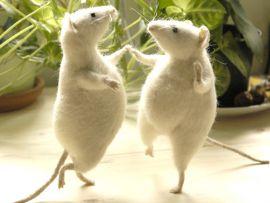 Quando il gatto non c'è i topi ballano