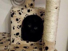 Gatto nero nascosto