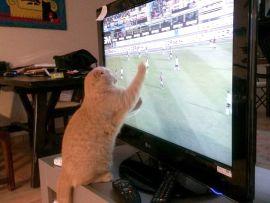 Gatto e tv