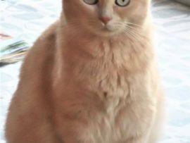 Foto della gatta Ambra