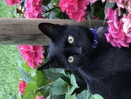 Micio Marietto con fiori