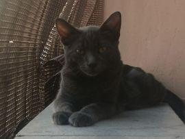 Gatti: Ulay il diavoletto