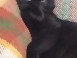 Gatto nero: Salem