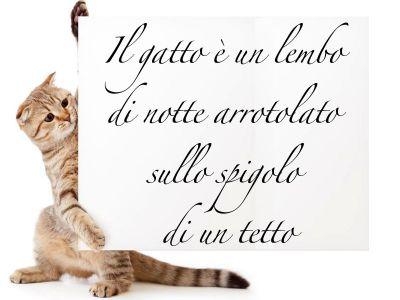 Aforismi, frasi e poesie sui gatti