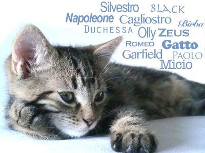 Come scegliere il nome da dare al gatto