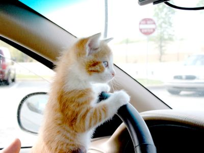 Cosa fare se il gatto soffre di mal d'auto