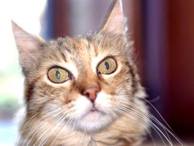 Perché i gatti fissano il vuoto