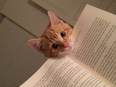 Chi ha un gatto è più intelligente