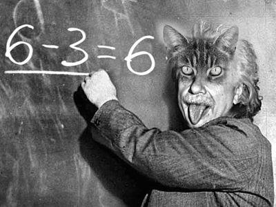 Intelligenza dei gatti
