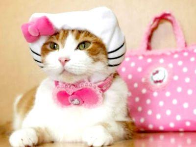 Troppe cure stressano i gatti