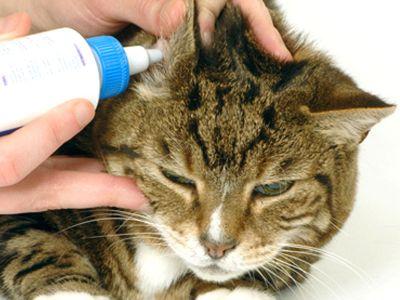 Cura e igiene delle orecchie del gatto