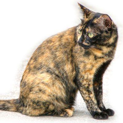 Il Mantello Del Gatto Colori E Disegni