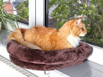 Cucce per gatti come scegliere - Come fare il bagno al gatto ...